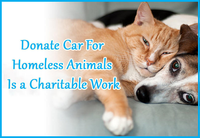 Donate car for homeless animals is a charitable work